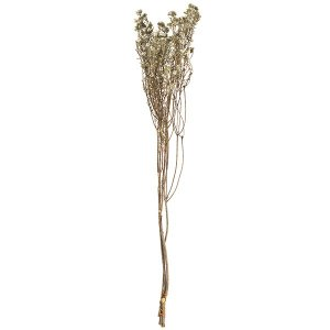 ドライフラワー・ワイルドコットンフラワー・全長60cm・2束セット(1束3本×2束)(天然素材/自然素材/花材)(フラワーアレンジメント/ディスプレイ/装飾)