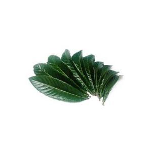 【おためし価格】無農薬 枇杷の葉(びわの葉) 100g(枇杷の生葉10枚前後) ※メール便送料無料、代引き・同梱不可