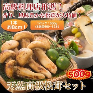 松茸 マツタケ まつたけ日本料理店ご推薦「天然高級松茸 」500gセット|kensei-online