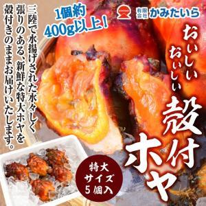 2020 新物 ほや ホヤ おいしいおいしい殻付ホヤ 特大サイズ 5個入 三陸産 真ホヤ 4年子ほや 1個あたり400g以上(かみたいら) kesennu-market
