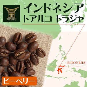 コーヒー豆 トアルコ トラジャ ピーベリー 200g × 1袋 インドネシア スラウェシ島 スペシャ...