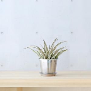 フラワーポット 植木鉢 | plecta フラワーポットセット 植木鉢 Φ85 KEYUCA(ケユカ)|keyuca