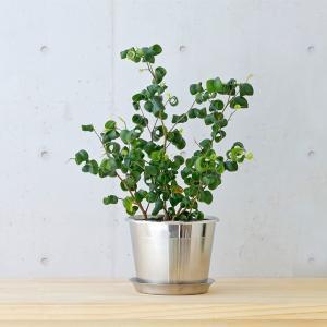 フラワーポット 植木鉢 | plecta フラワーポットセット 植木鉢 Φ120 KEYUCA(ケユカ)|keyuca