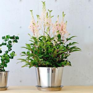 フラワーポット 植木鉢 | plecta フラワーポットセット 植木鉢 Φ150 KEYUCA(ケユカ)|keyuca