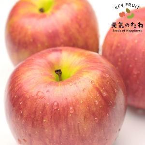 りんご サンふじ 1箱 2.5kg 贈物 贈答 贈り物 果物...