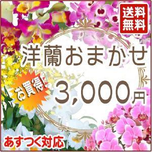 洋蘭おまかせ3,000円|kihana-shop