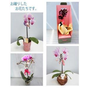 洋蘭おまかせ3,000円|kihana-shop|05