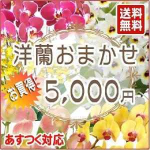 洋蘭おまかせ5,000円|kihana-shop