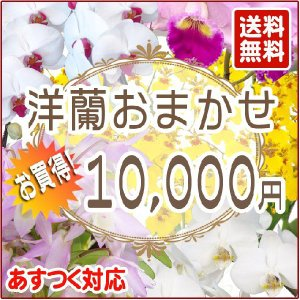 洋蘭おまかせ10,000円|kihana-shop