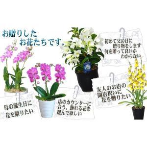 洋蘭おまかせ10,000円|kihana-shop|05