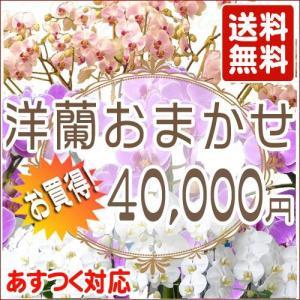 洋蘭おまかせ40,000円 kihana-shop