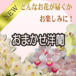 洋蘭おまかせ40,000円 kihana-shop 03