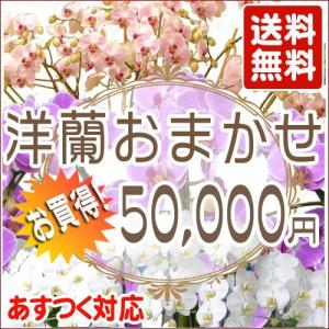 洋蘭おまかせ50,000円|kihana-shop