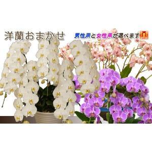 洋蘭おまかせ50,000円|kihana-shop|05