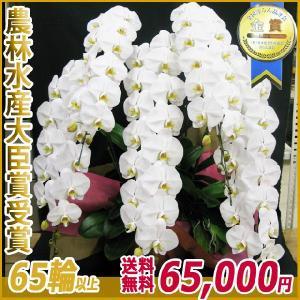 胡蝶蘭(コチョウラン) 大輪 白 5本立 65輪以上 16|kihana-shop