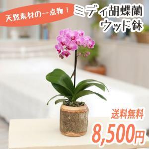 椎名洋ラン園のミディ胡蝶蘭1本立「ウッド鉢」|kihana-shop