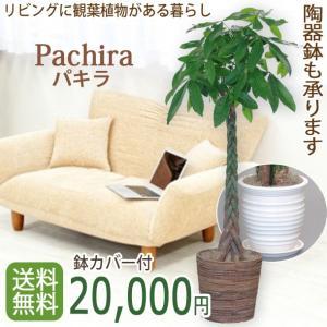観葉植物 パキラ10号 バスケット付き 開店祝い 新築祝いにオススメ|kihana-shop