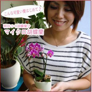 【敬老ギフト】マイクロ胡蝶蘭|kihana-shop