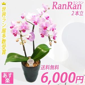 【敬老ギフト】世界ラン展多数受賞!ランラン2本立|kihana-shop