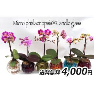 マイクロ胡蝶蘭1本立「キャンドルグラス」|kihana-shop