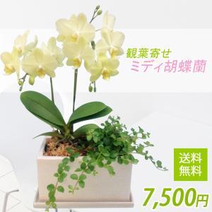 観葉寄せミディ黄色2本立オリジナル陶器鉢(パルテノ鉢)|kihana-shop