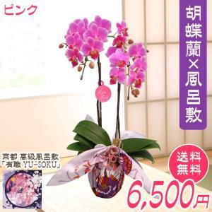 ミディ胡蝶蘭2本立風呂敷包み ピンク系 kihana-shop