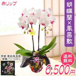 ミディ胡蝶蘭2本立風呂敷包み 赤リップ系 kihana-shop