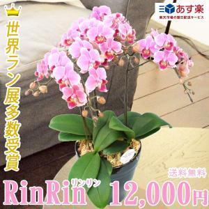 【敬老ギフト】リンリン3本立|kihana-shop