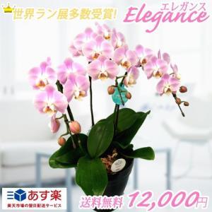 【敬老ギフト】エレガンス3本立|kihana-shop