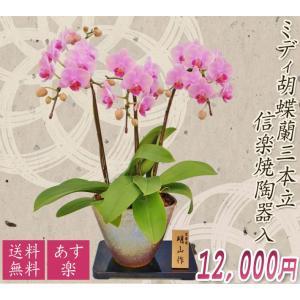 【敬老ギフト】ミディ胡蝶蘭信楽焼陶器入り3本立|kihana-shop