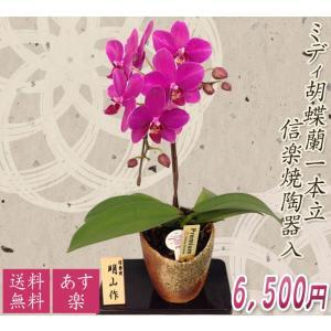 【敬老ギフト】ミディ胡蝶蘭信楽焼陶器入り1本立|kihana-shop