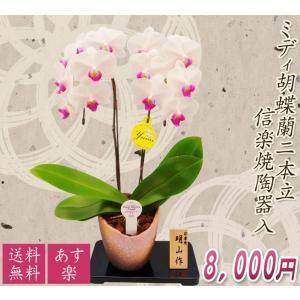 【敬老ギフト】ミディ胡蝶蘭2本立赤リップ系 信楽焼陶器入|kihana-shop