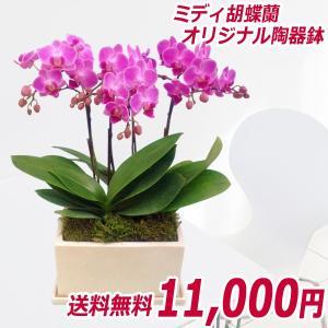 【敬老ギフト】ミディ3本立オリジナル陶器鉢(パルテノ鉢) ピンク系|kihana-shop