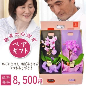【敬老ギフト】マイクロ1本立 敬老限定ペアギフト|kihana-shop