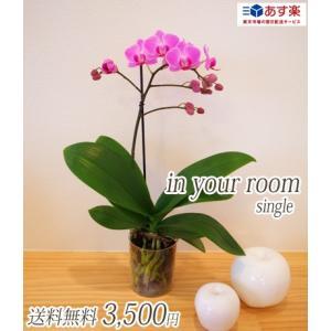 【敬老ギフト】明日贈れる カジュアル胡蝶蘭「in your room」Single(1本立ち)|kihana-shop