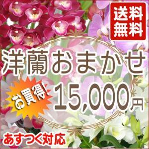 洋蘭おまかせ15,000円|kihana-shop