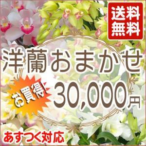 洋蘭おまかせ30,000円|kihana-shop