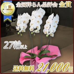 胡蝶蘭(コチョウラン) 大輪 白 3本立 27輪以上 3|kihana-shop
