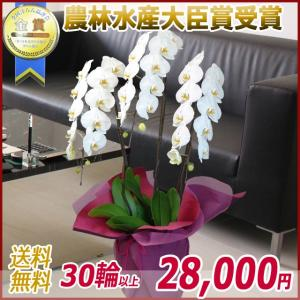 胡蝶蘭(コチョウラン) 大輪 白 3本立 30輪以上 8|kihana-shop