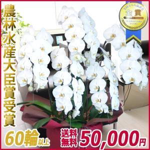 胡蝶蘭(コチョウラン) 大輪 白 5本立 60輪以上 21|kihana-shop