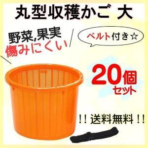 大サイズ 丸型 収穫かご 20個セット ベルト付き 野菜などを傷めにくい! オレンジ色 季節限定販売商品【6月〜2月まで】|kiitos-shop
