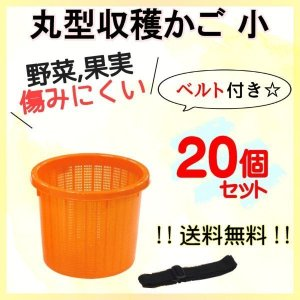 小サイズ 丸型 収穫かご 20個セット ベルト付き 野菜などを傷めにくい! オレンジ色 季節限定販売商品【6月〜2月まで】|kiitos-shop