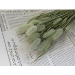 Lagurus green/ ラグラスのドライフラワー グリーン|kikisuu