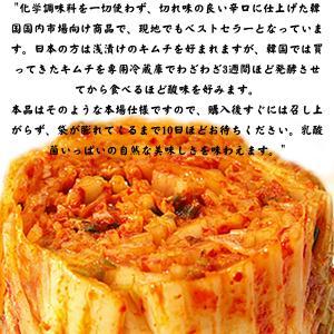 無添加 白菜キムチ 乳酸菌を味わう辛口 熟成用 1kg 韓国ハンウル|kimchiland|02
