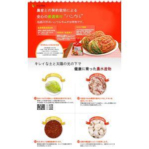 無添加 白菜キムチ 乳酸菌を味わう辛口 熟成用 1kg 韓国ハンウル|kimchiland|03