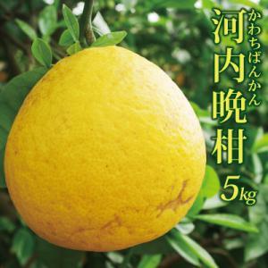 ※外観が多少悪いです。愛媛産 精品河内晩柑5kg(かわちばん...