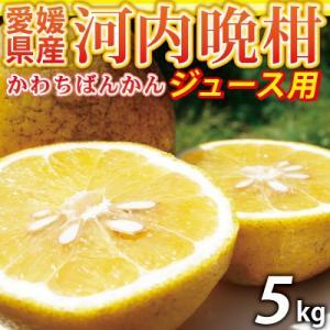 愛媛産 ジュース用河内晩柑5kg(かわちばんかん)外観の非常...