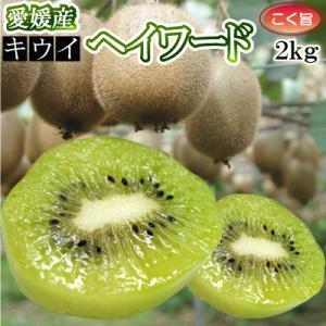 【ご予約 1月発送】愛媛県産キウイフルーツ2kg(品種:ヘイワード以外の品種が混ざる場合があります)