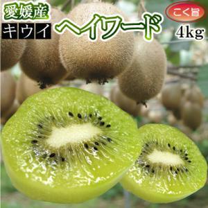【ご予約 1月発送】愛媛県産キウイフルーツ4kg(品種:ヘイワード以外の品種が混ざる場合があります)