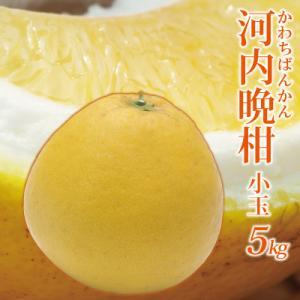 愛媛産 小玉河内晩柑5kg(かわちばんかん)(サイズS〜M込...